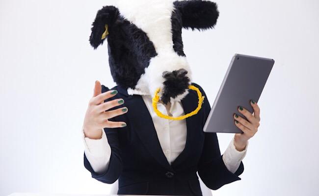 質問に答える牛